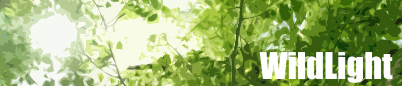 wildlight-banner